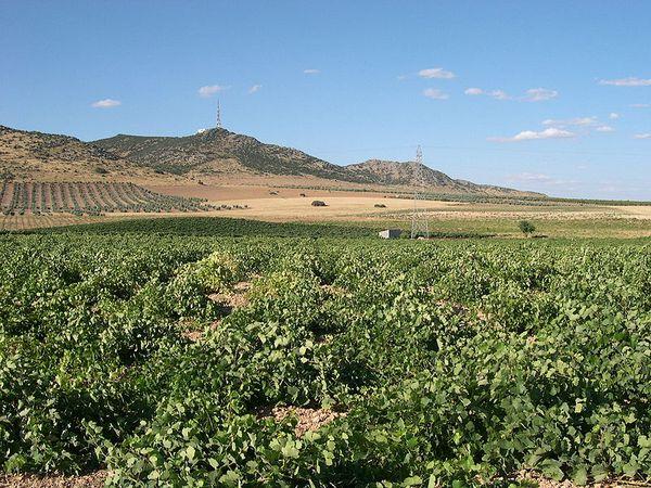 Vineyards in Castilla-La Mancha