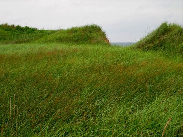 Grassy dunes, PEI