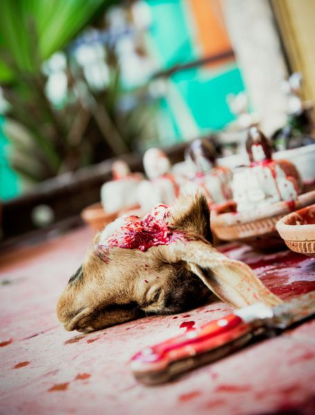 Some doves and a lamb were sacrificed as part of the Santaria religious ceremony.