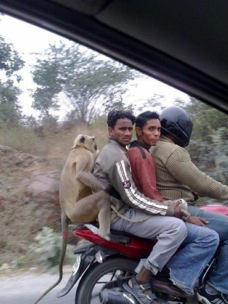 Apparently, this is motorcycling in India...
