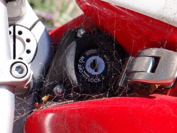 Shameful Ducati Monster more cobwebs