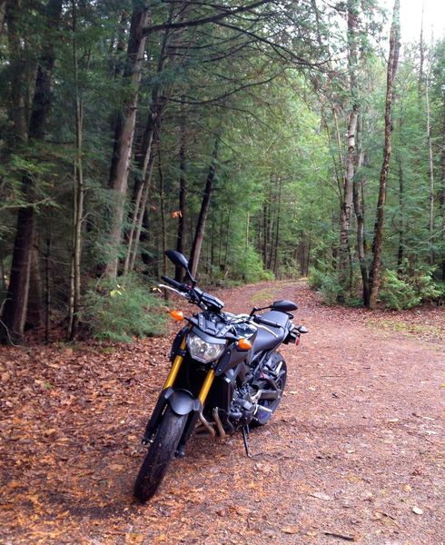 Yamaha Fz09/mt09 - (Almost) Triple Perfection | Review