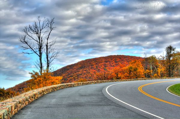 Fall Colours Along the Scenic Skyline Drive