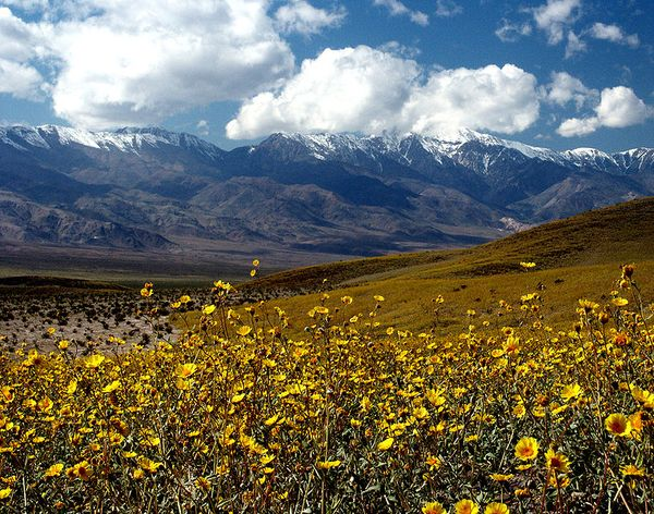 Death Valley Blooms