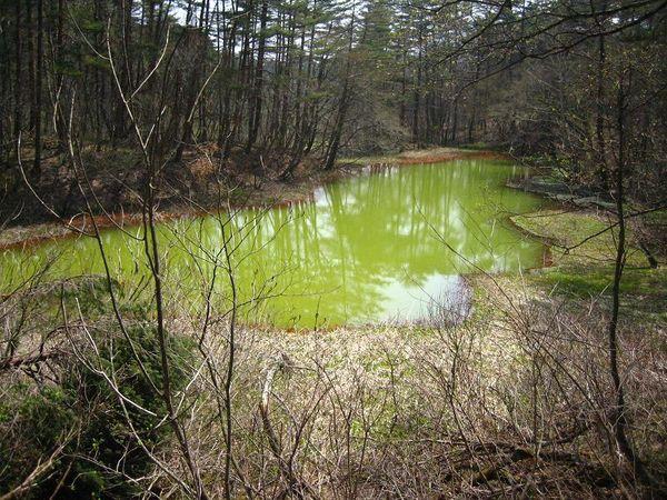 Aka-numa Pond, Japan
