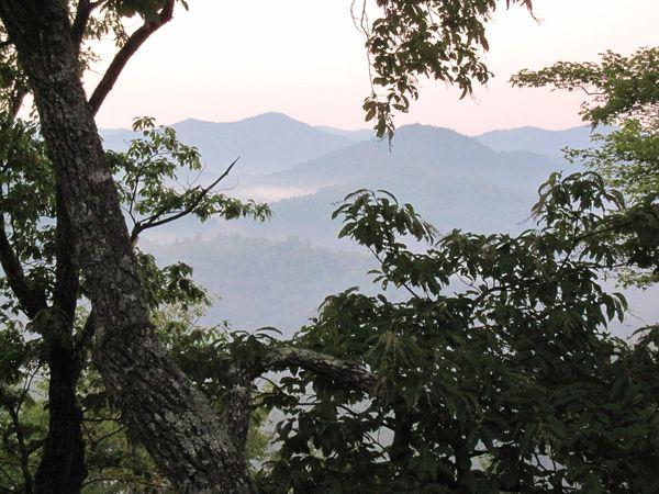 Forest view at Snowbird Mountain Deals Gap.jpg